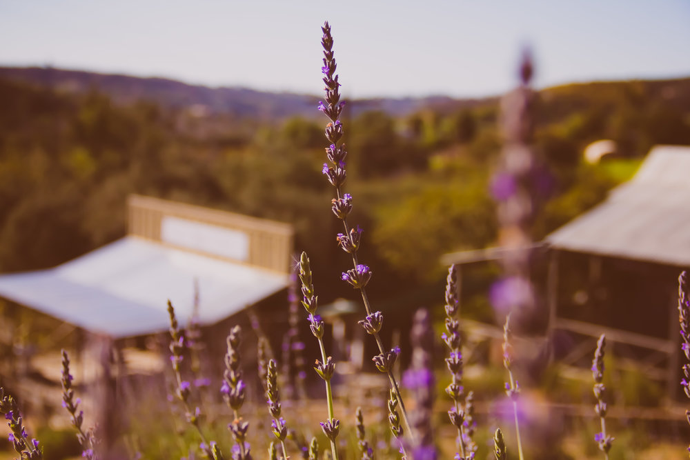 *farmphoto5.jpg