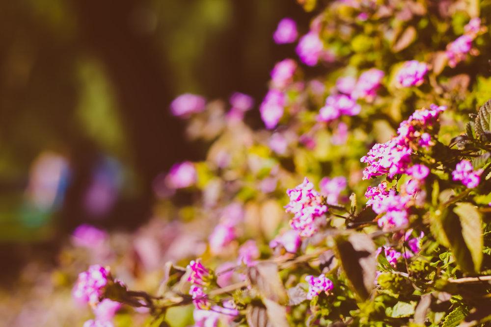 *flowers1.jpg