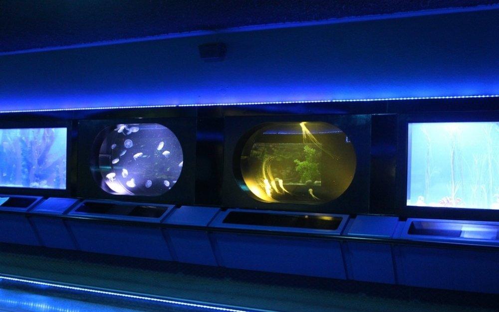 Custom Tank Gallery