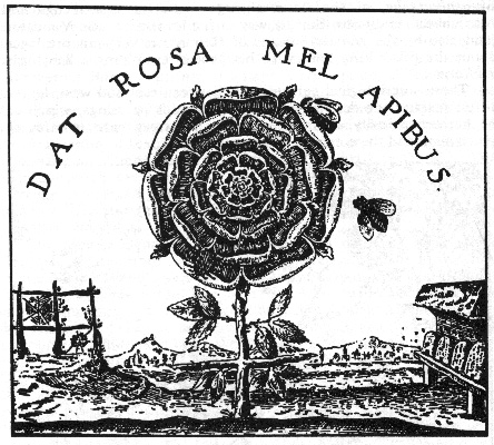rosefeedsthebeese