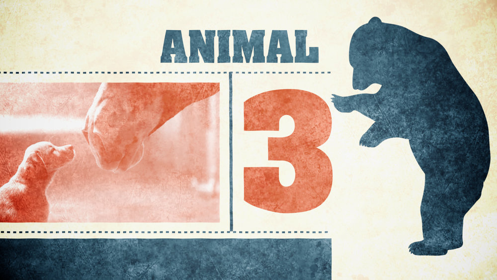AnimalCountdown1.jpg
