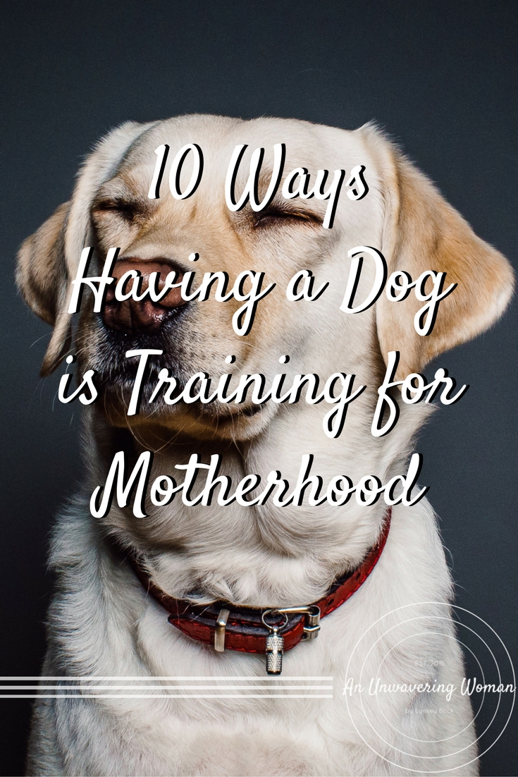 10 Ways Having a Dog is Training for Motherhood