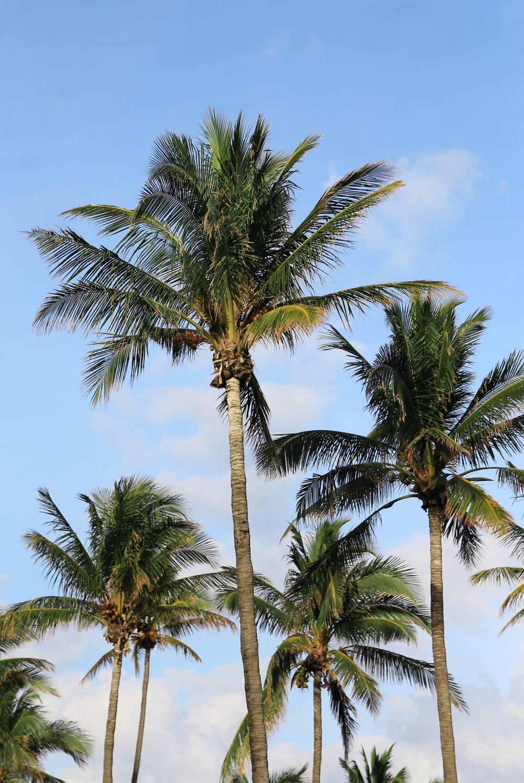 Miami VSCO38.jpg