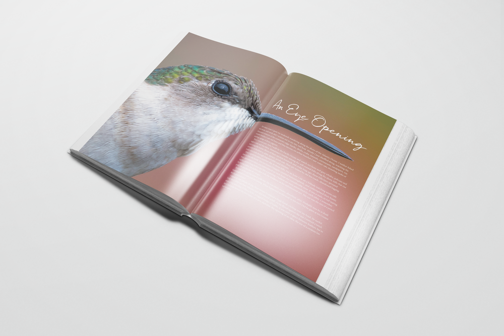 BD_book5.png