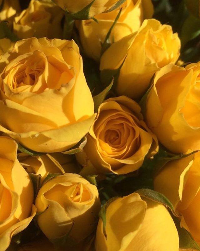 Las flores de hoy. 💛🌼 Enamoradas del tono amarillo en todas sus presentaciones. Fuente de Inspiración para las piezas de nuestras colecciones. •GEOMÉTRICA• •MINIMAL•  #shuviluna #yellow #amarillo #inspiration #coleccion SHUVILUNA.COM
