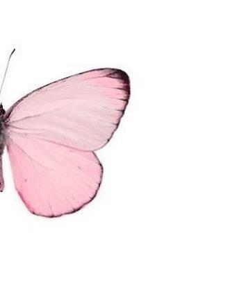 Bienvenido Octubre! Mes rosa y de conciencia en prevención de cancer de mama. ShuviLuna se une este mes apoyando en la compra de cualquier pieza de nuestra colección Velvet donando un  porcentaje de las ventas. 🎀TODO EL MES DE OCTUBRE🎀 #october #cancerawareness #shuviluna #pink