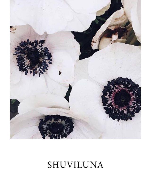 🖤🖤🖤Hoy es nuestro segundo día de promo en nuestra tienda en línea -15% con nuestro código SHUVIDAYS . Visita nuestra página y conoce todas nuestras colecciones. #shuviluna #onlineshopping #onlinesale SHUVILUNA.COM