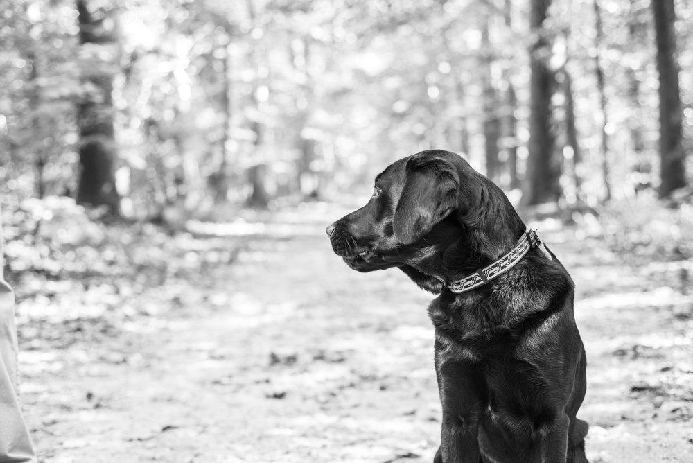 Northern Virginia Photographer Jackson-37.jpg