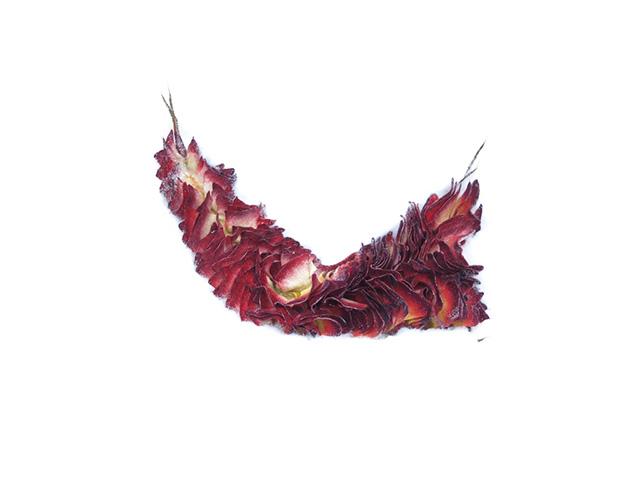 draken-staart.jpg