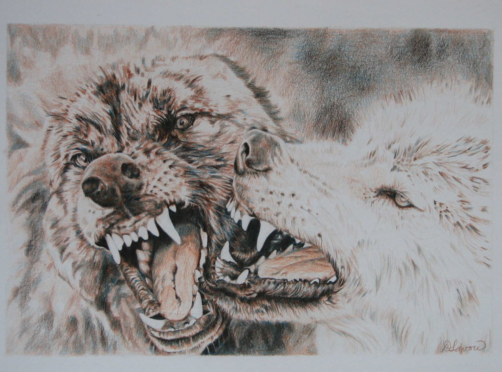 Wolves   Coloured Pencil  Private Collection - Canada