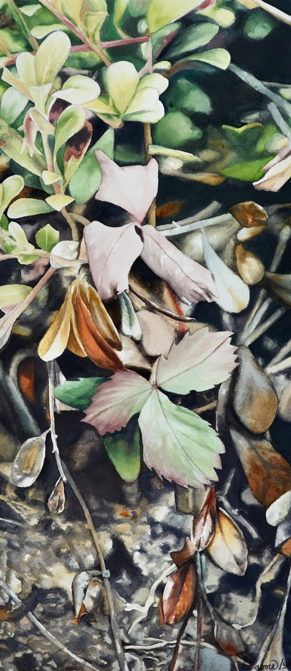 Deep Forest   Watercolour on paper   Available as a limited edition print on paper.   While hiking in the Kananaskis, I came across these wild strawberry leaves during their Autumn changes. I was inspired by the gentle colour combination and elegant shapes as these plants are slowly easing their way into their winter slumber.