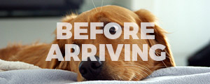 Before Arriving for Your Dog Grooming
