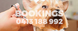Book Your Dog For Grooing