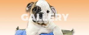 See Photos of us Grooming Dogs