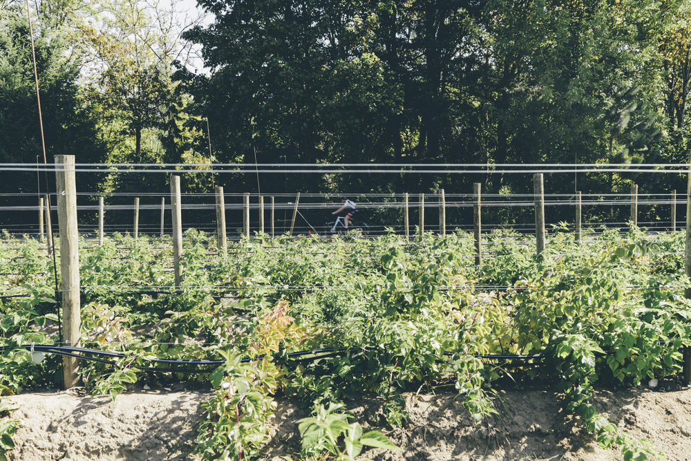 Heiser Farms-22.jpg