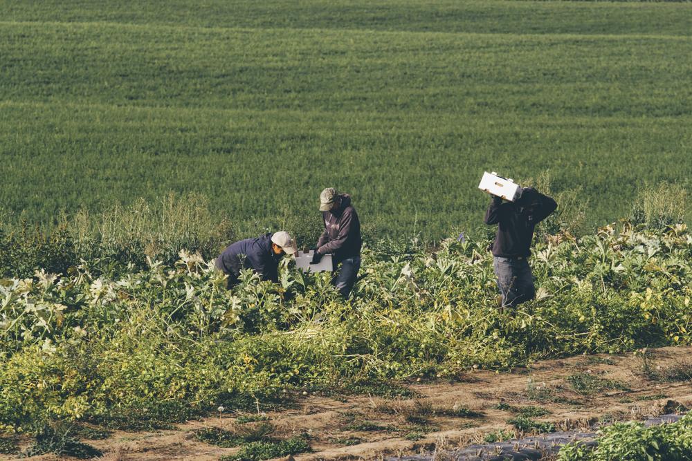 Heiser Farms-60.jpg