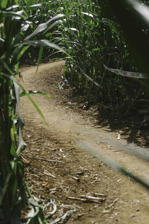 corn cross-28.jpg