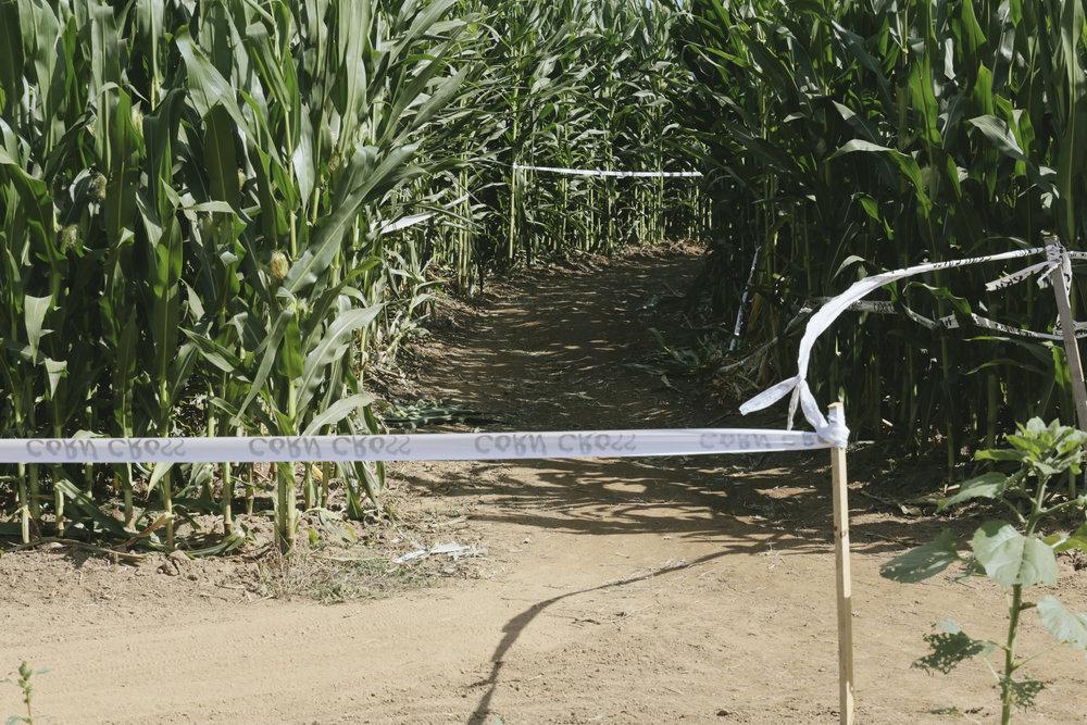 corn cross-39.jpg