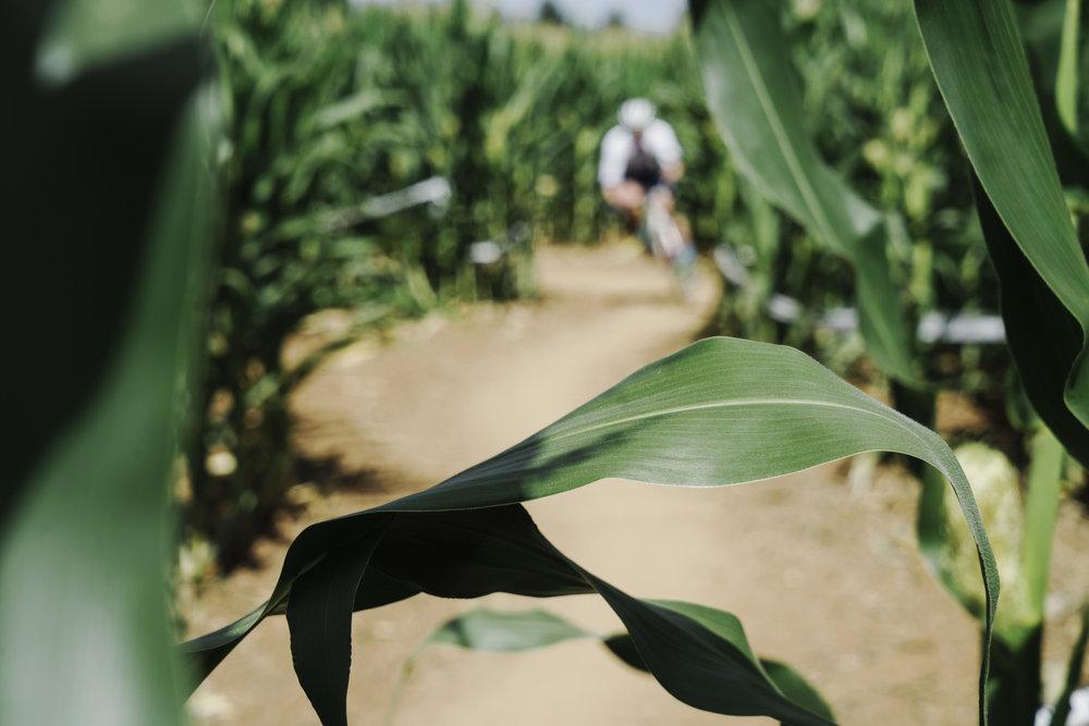 corn cross-15.jpg