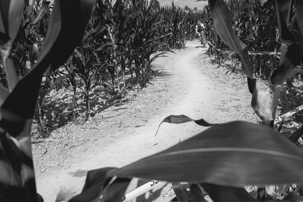 corn cross-18.jpg