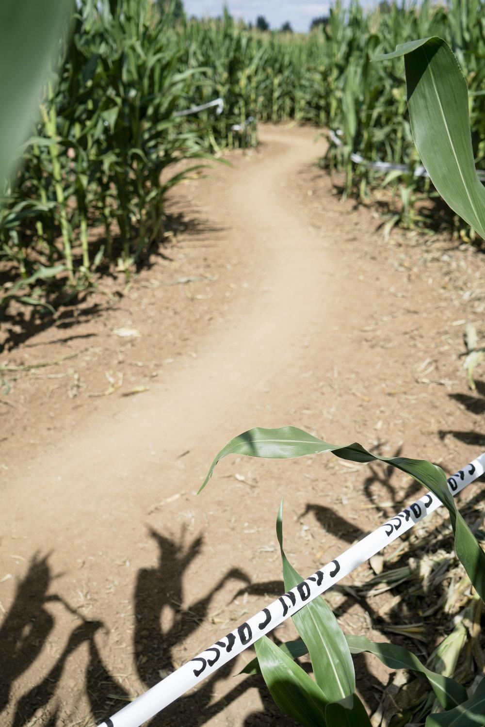 corn cross-23.jpg