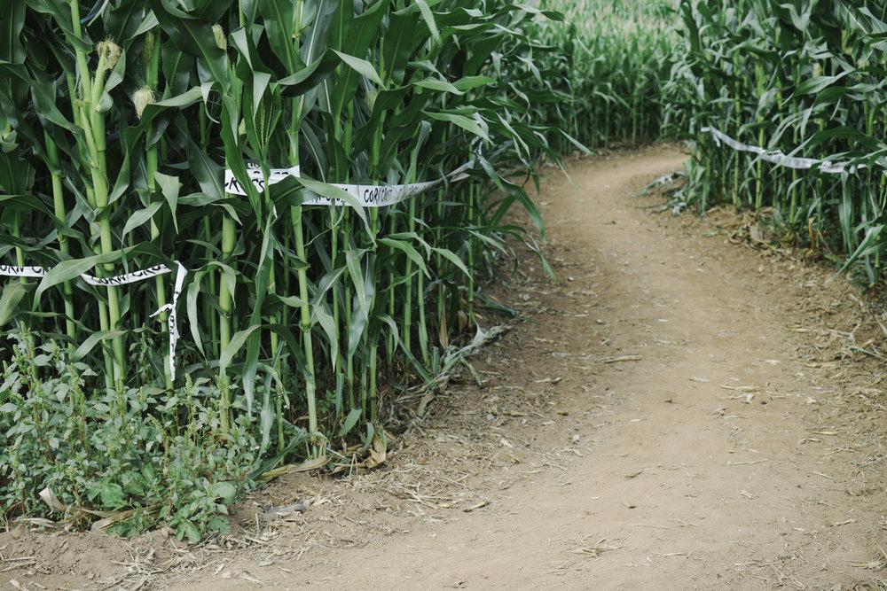 corn cross-27.jpg