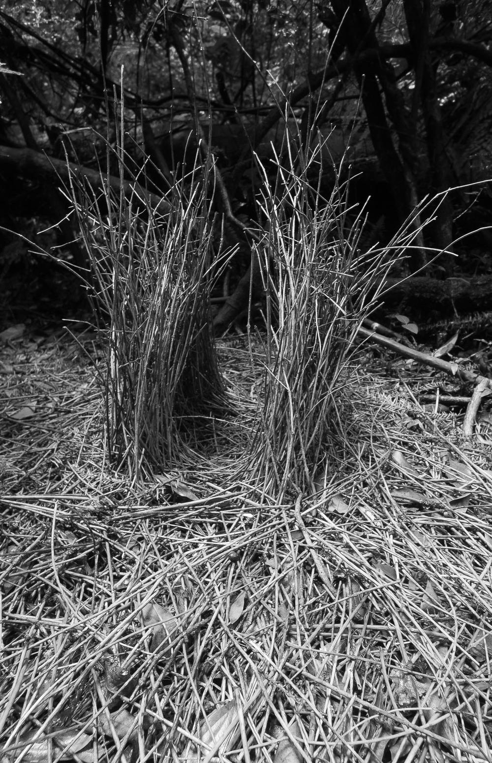 Fairy's Grove