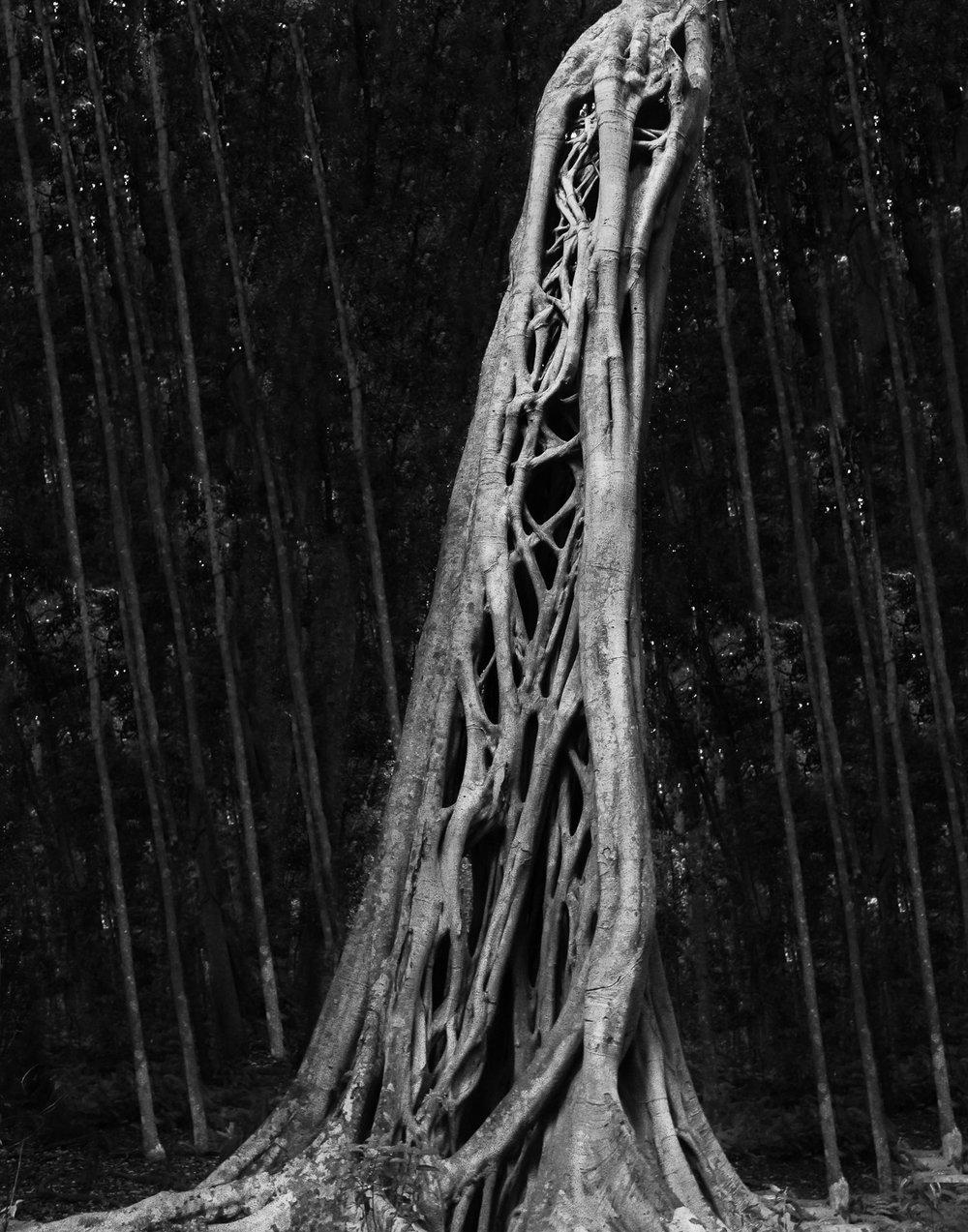 black leaf.jpg