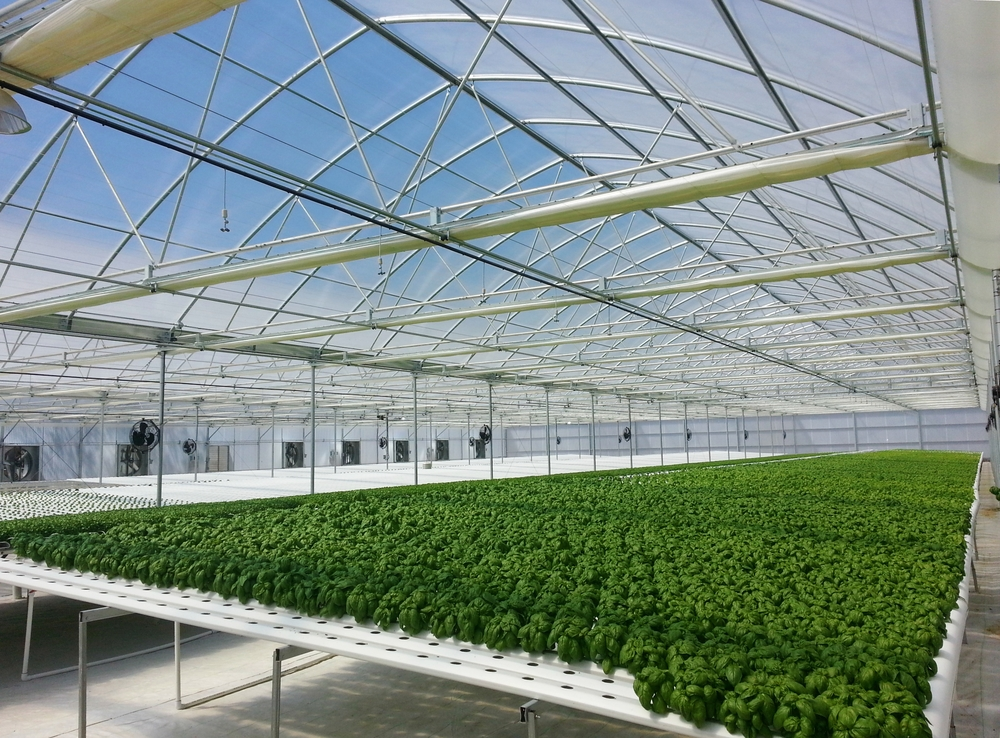 Morris Shaffer Structural Engineers - Agricultural Greenhouse.jpg
