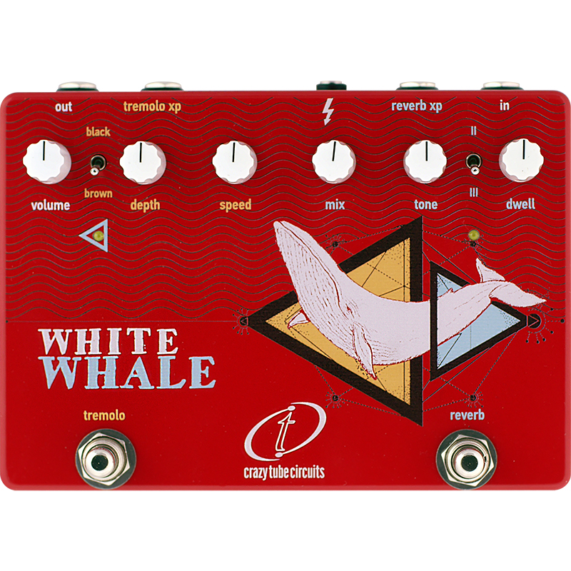 whitewhale_SQ.jpg