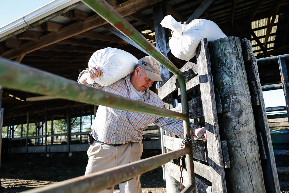"Thomas Richard ""Dick"" Mucci, a 65-year-old tobacco farm owner in Midway, Kentucky, takes time from working on his tobacco farm to tend to his cattle. ""You should always have multiple ways of generating income because you can't always count on your crop,"" he says. Mucci Farm is one of 20 remaining tobacco farms in Kentucky. With more tobacco farming being outsourced to foreign countries, Mucci believes that within 10 years Untied States tobacco farming will be a thing of the past."