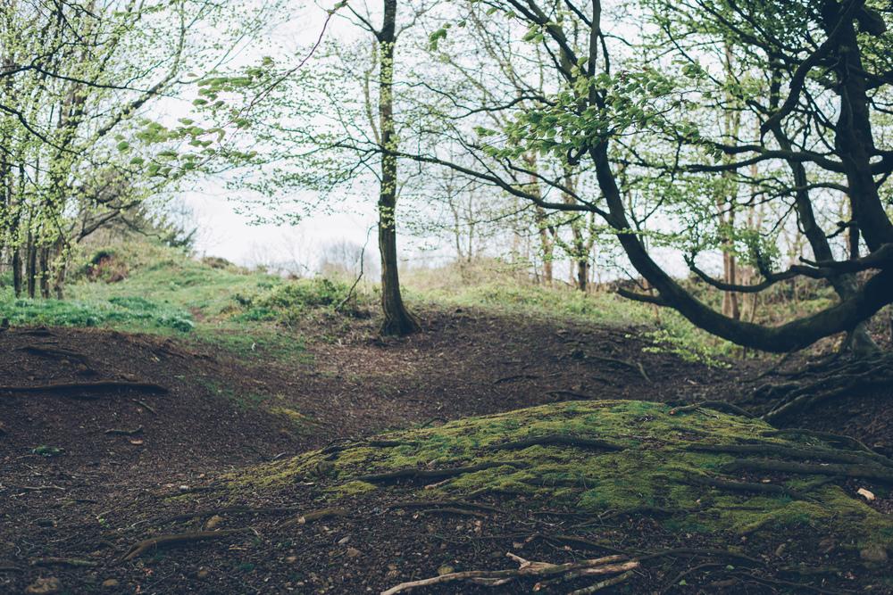 George Bale Mendip Hills 5