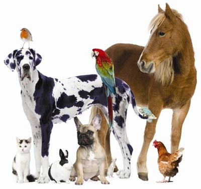 - This short course looks at the essential elements withing animal welfare. Ideal as a good starter for studying in the industry. To download just click on FREE COURSE