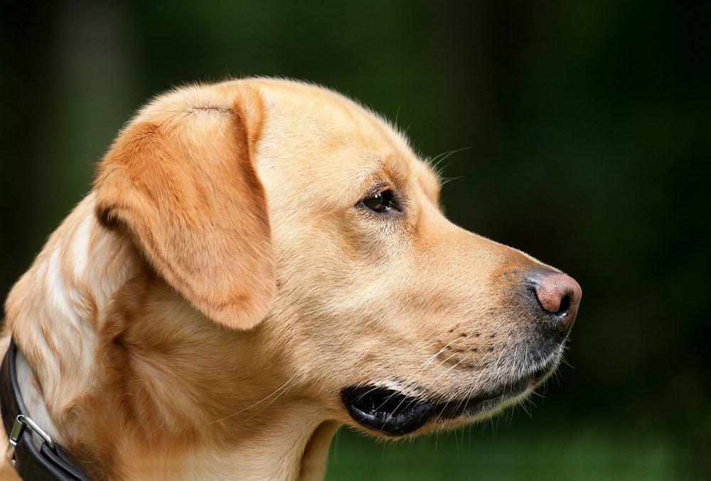 dog-1194083_1280.jpg