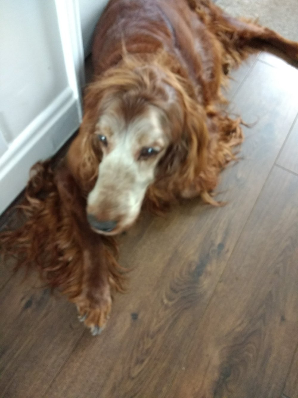 Chloe our mature Irish Setter is having laser therapy. We are all very pleased with the results to date. Paul and Lorraine have been wonderful with Chloe and very reassuring with us.  Their work is very professional and carried out in a relaxed manner They have made Chloe feel very relaxed. Chloe is a dog that gets very stressed going to a vet practice.  So top marks for Vet Nurse Direct