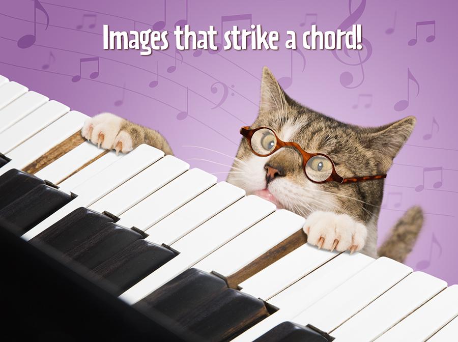 Cat playing Piano website.jpg