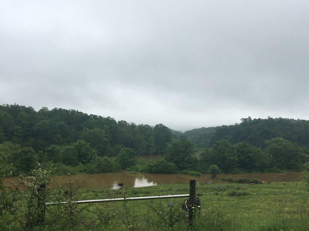 Goose Creek 5.JPG