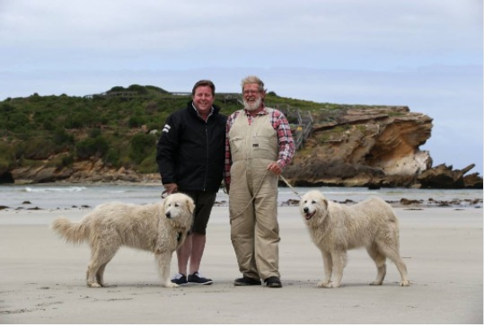 Shane Jacobson and Allan 'Swampy' Marsh in front of Middle Island, with Maremmas Tula and Eudy.  Photo credit: Warnambool Standard