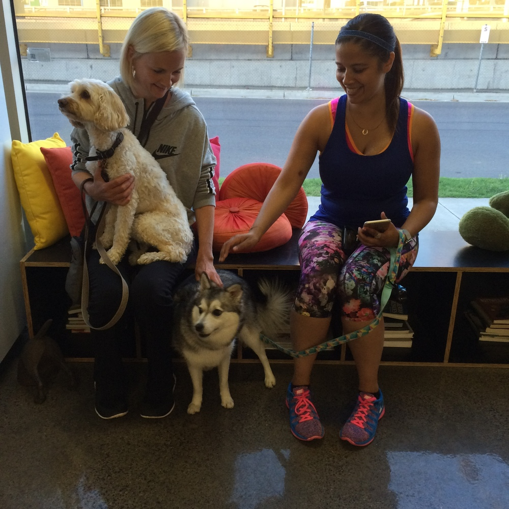 Hershey the Spoodle and Havoc the Alaskan Klee Kai, waiting in the foyer with their humans