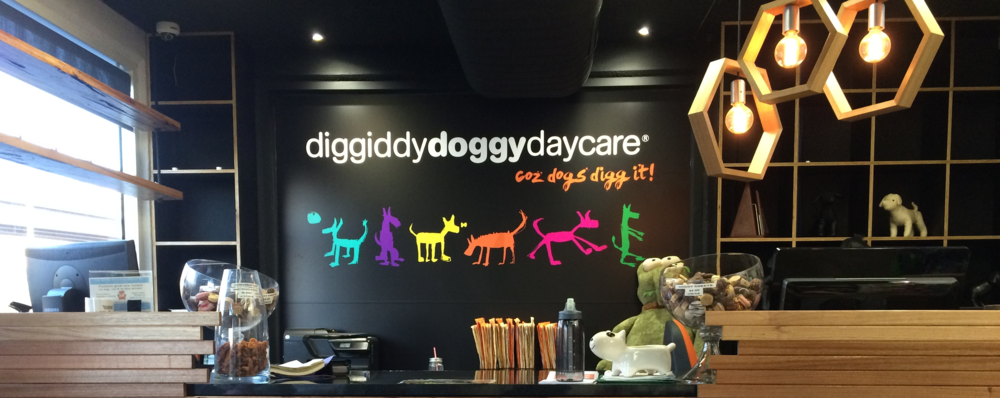 The colourful backdrop of the Diggidy Doggy Daycare front desk