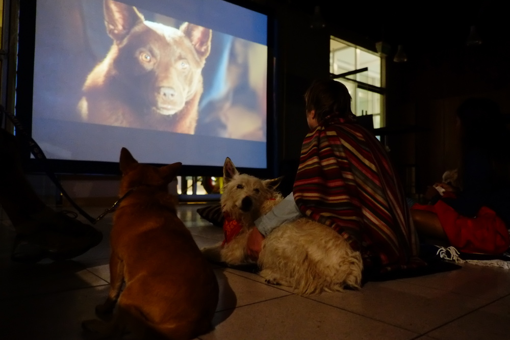 Red Dog on screen