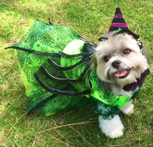 Midge, the prettiest doggy witch I ever saw!
