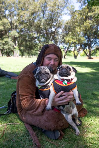 Pugs and Wilfred