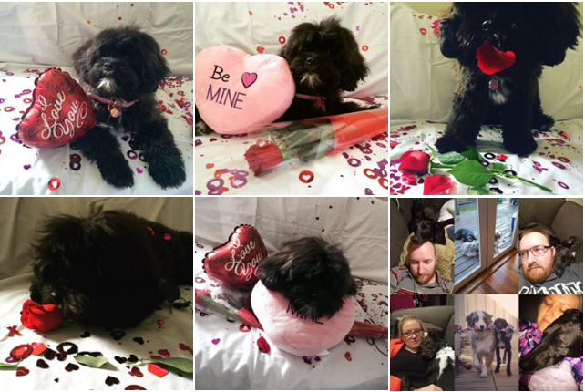 Valentine's Dogs
