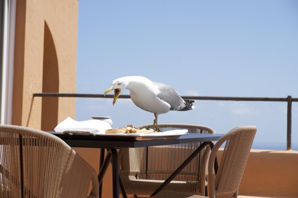 Seagull - Capri, Italy