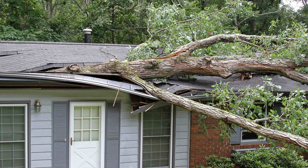 Tree on House Small.jpg
