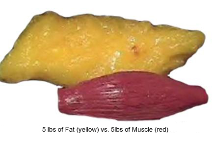 5lb-fat-muscle2-copy