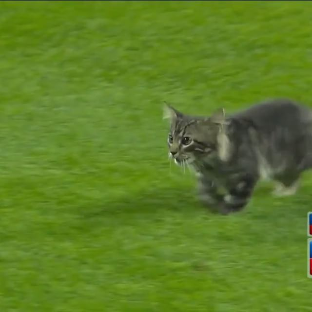 A stray cat ran onto the St. Louis Cardinals field, bit a member of the games crew, and inspired a Yadier Molina Grand Slam. The #RallyCat is more adoptable than Little Orphan Annie.