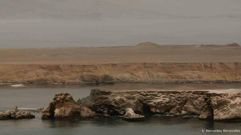 Reserva Nacional San Fernando, Ica, creada en 2009  National Reserve of San Fernando, Ica, created in 2009