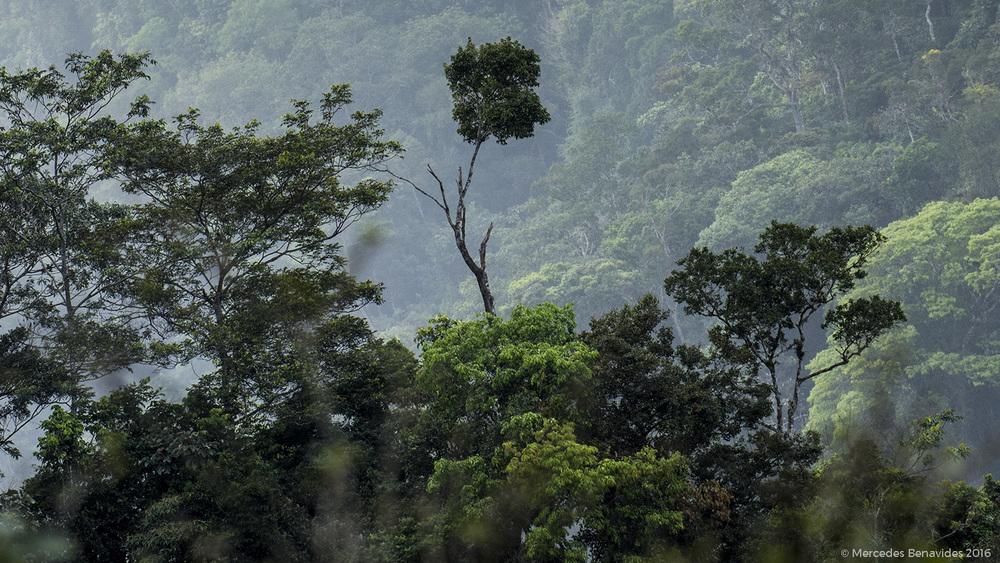 Mirador Restaurante T  í  pico el Mono y la Gata    Carretera Tarapoto - Yurimaguas,Area de Conservación Regional Cordillera Escalera, San Martín    Mes / Month: Junio / June